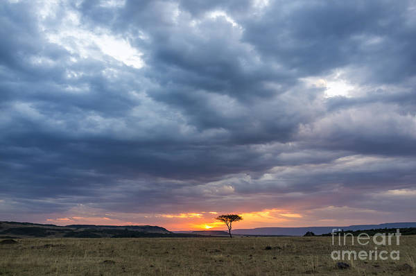 Beautiful Sunset In The Savannah Of Poster