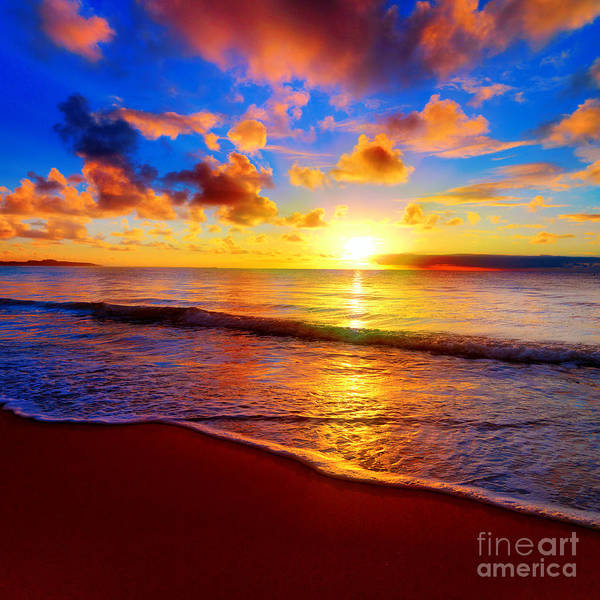 Beautiful Tropical Sunset On The Beach Poster