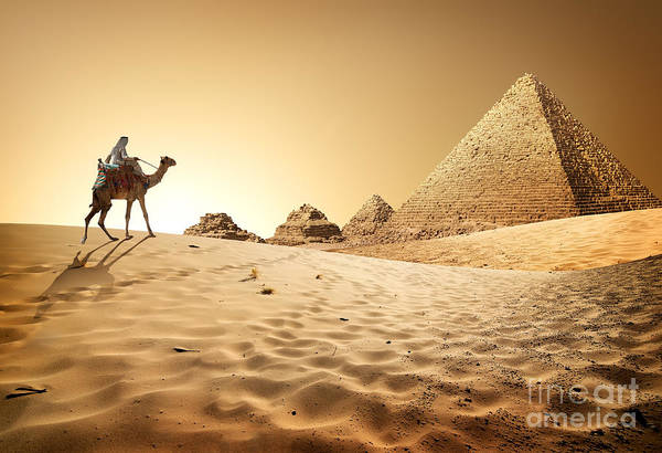 Bedouin On Camel Near Pyramids In Desert Poster
