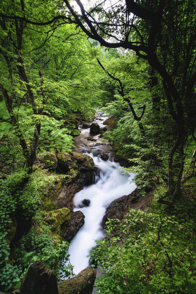 Bela River, Balkan Mountain Poster
