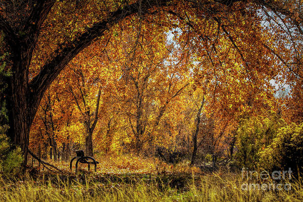 Bench With Autumn Leaves  Poster
