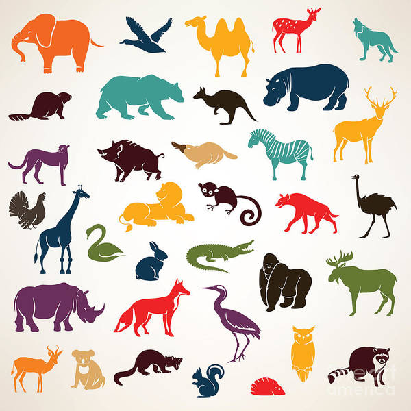 Big Set Of African And European Animals Poster