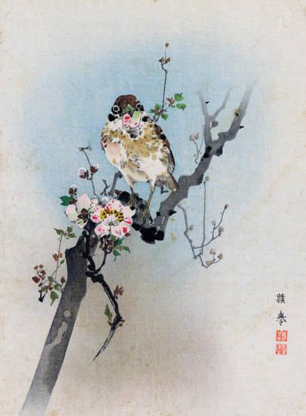 Bird And Petal Poster