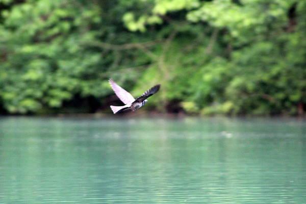 Bird In Flight Poster