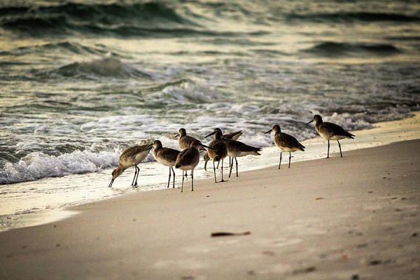 Birds On The Beach Poster