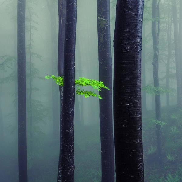 Bit Of Green Poster