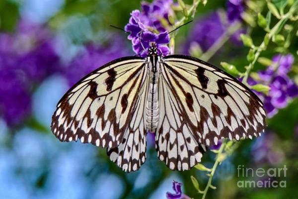 Black And White Paper Kite Butterfly Poster