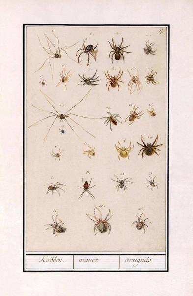 Blad Met Spinnen Poster