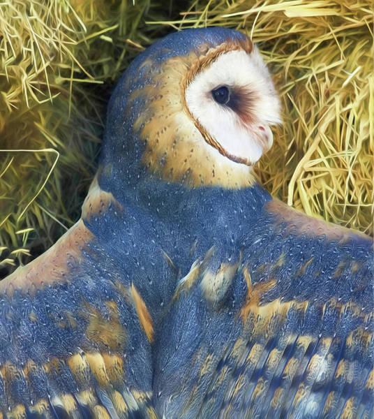 Blue Barn Owl Poster