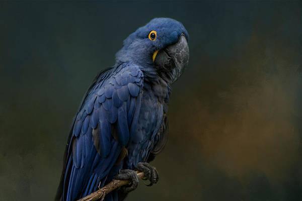 Blue Beauty Poster