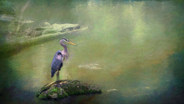 Blue Heron Isolated Poster