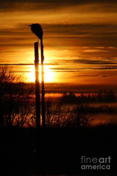 Blue Heron Sunrise 2 Poster