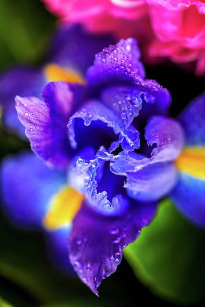 Blue Iris Dance Poster