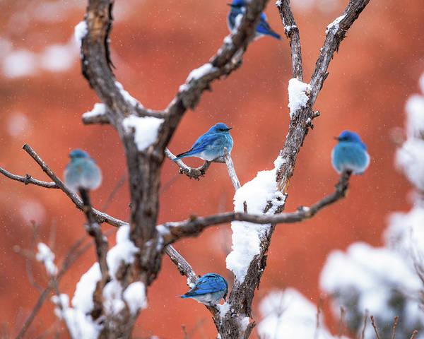 Bluebird Compass Poster