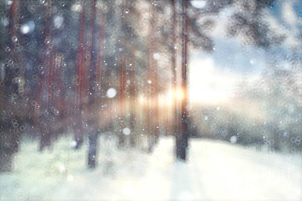 Blurred Background Forest Snow Winter Poster