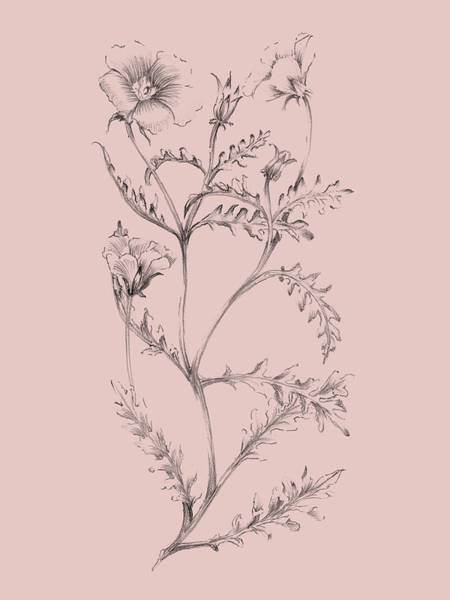 Blush Pink Flower Illustration I Poster