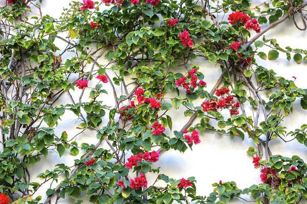 Blushing Blooms Poster