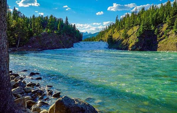 Bow River In Banff Poster