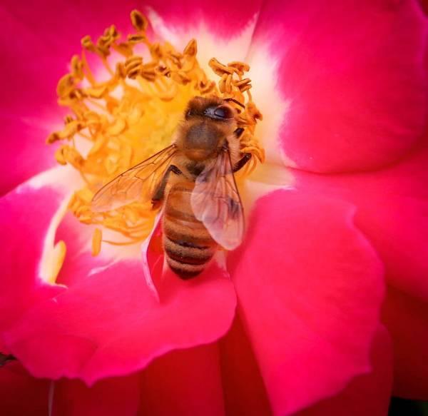 Brilliant Bee Poster