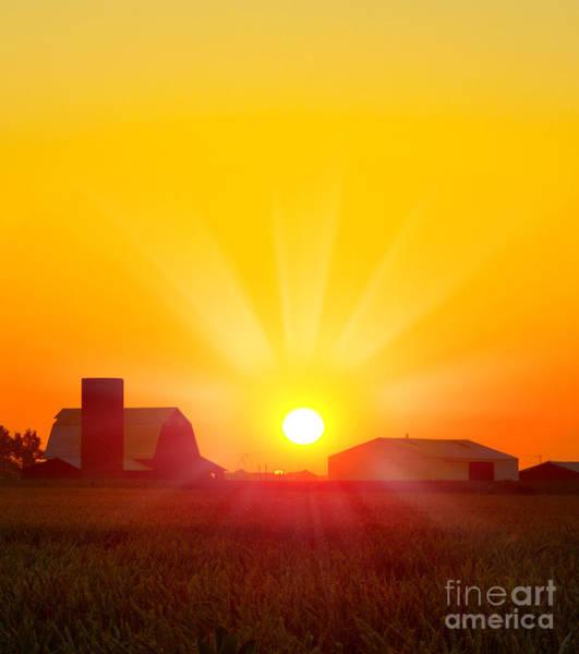 Brilliant Orange Sunrise Over A Corn Poster