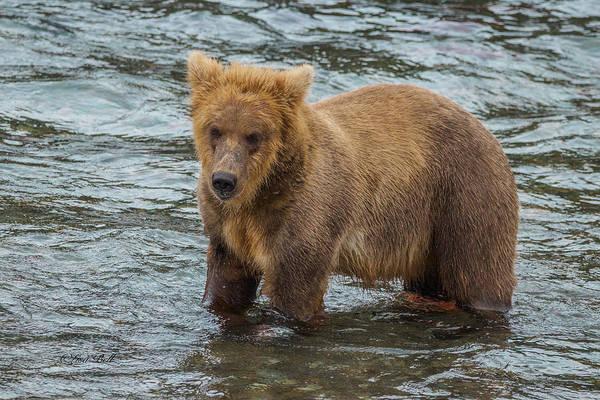 Brown Bear Stricking A Pose Poster