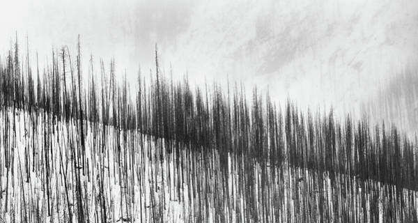 Burnt Trees Poster