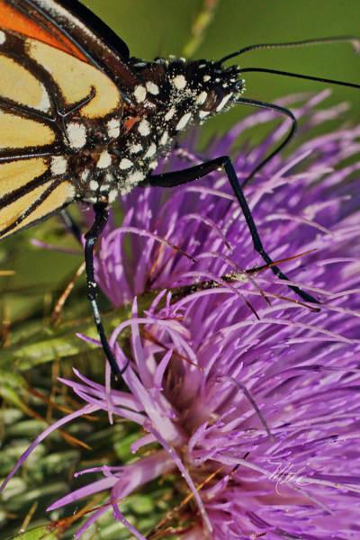Butterfly Closeup Vertical Poster
