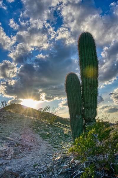 Cactus Portrait  Poster