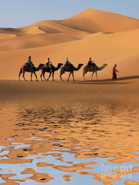 Camel Caravan Going Along The Lake The Poster