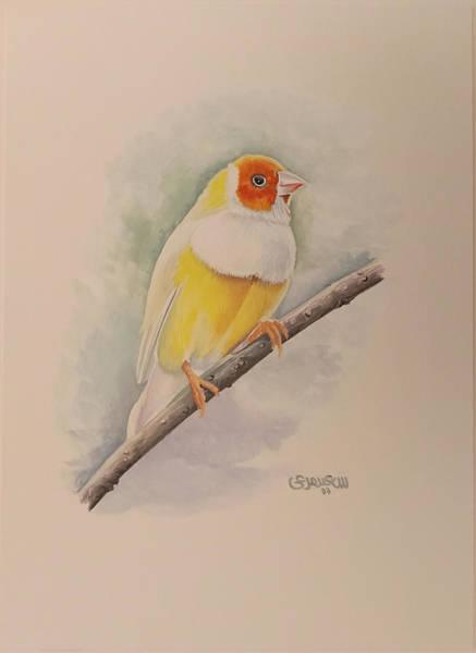 Canary Bird Poster