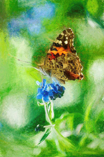 Chalky Painted Lady Butterfly Poster