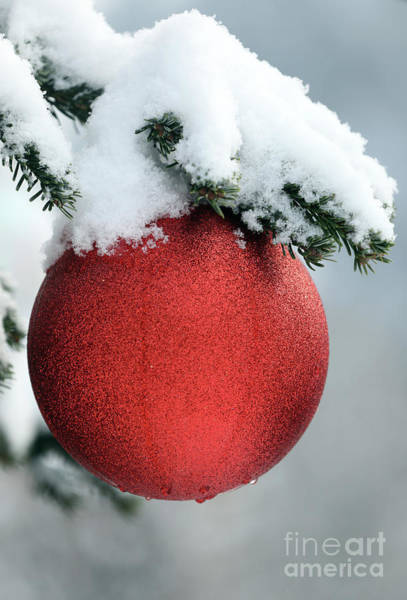 Christmas Tree, France Poster