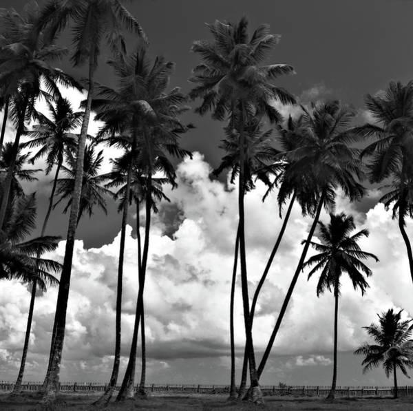 Coconut Trees At Mayaro Poster