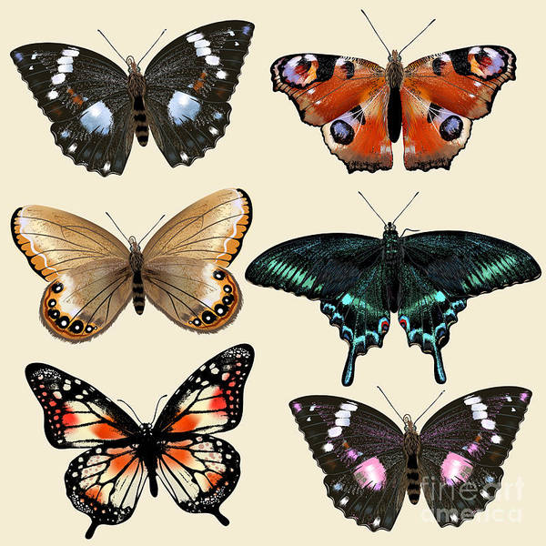 Collection Of Vector Colorful Realistic Poster