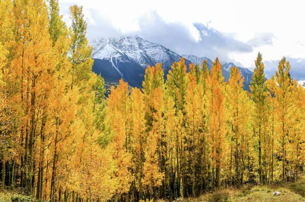 Colorado Aspens And Mountains 1 Poster