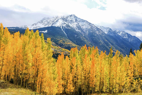 Poster featuring the photograph Colorado Aspens And Mountains 2 by Dawn Richards