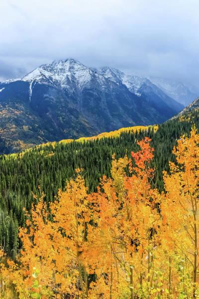 Colorado Aspens And Mountains 4 Poster