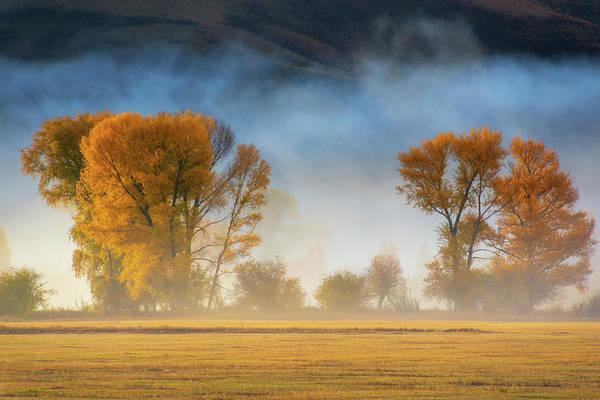 Colorado Autumn Fog Poster