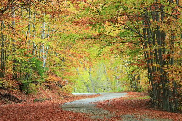 Colorful Autumn Road Rila Mountains Bulgaria  Poster
