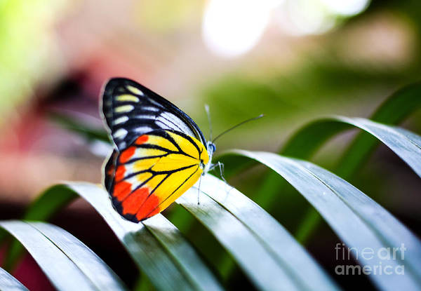 Colorful Butterfly Resting On The Palm Poster