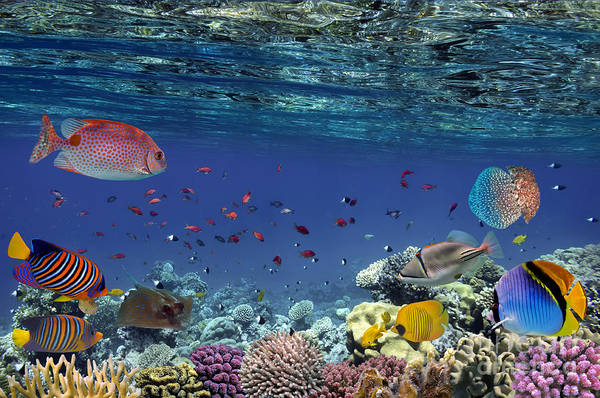 Colorful Reef Underwater Landscape With Poster