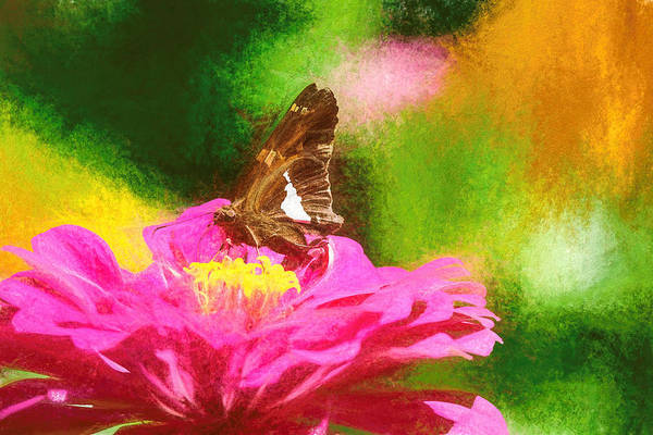 Colorful Silver Spotted Skipper Butterfly Poster