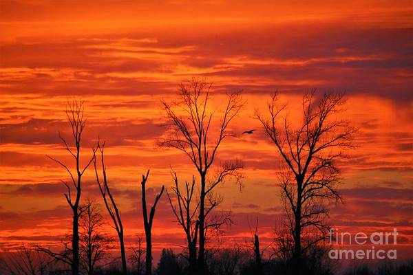 Colorful Sunrise Trees Poster