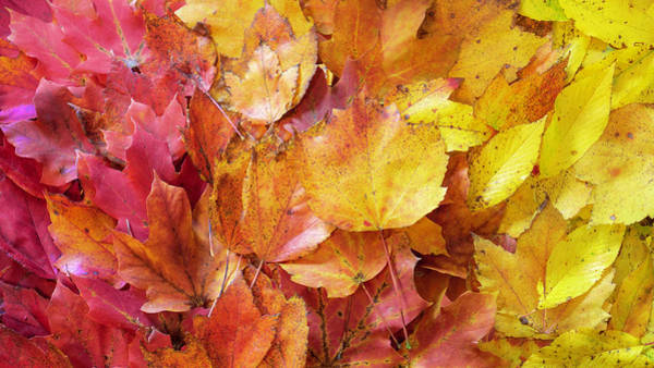 Colors Of Fall - Red To Yellow Poster