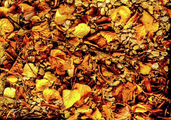 Colours. Autumn Gold Poster