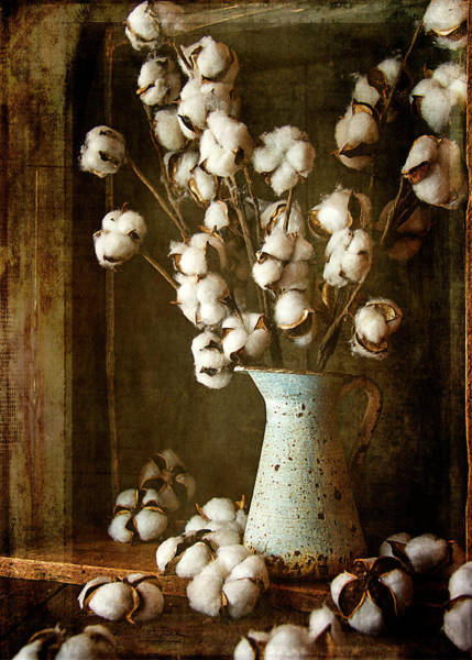 Country Cotton Poster