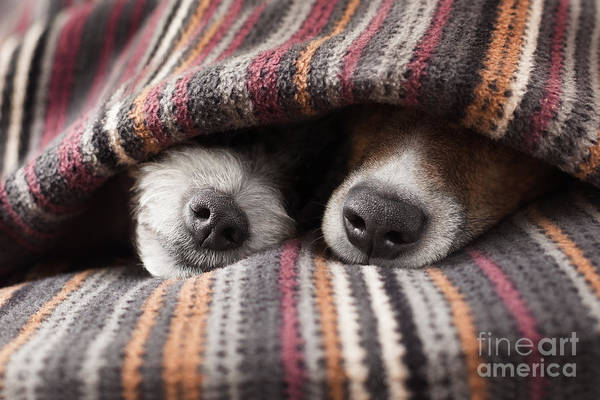 Couple Of Dogs In Love Sleeping Poster