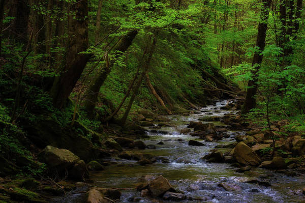 Creek Flowing Through Shady Forest Poster