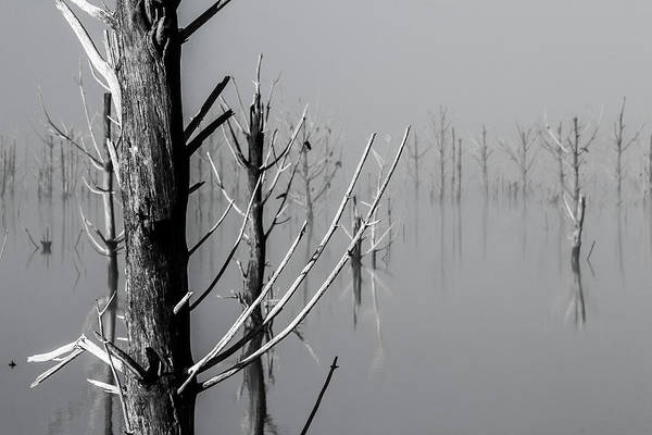 D1095 - Theewaterskloof Trees Poster