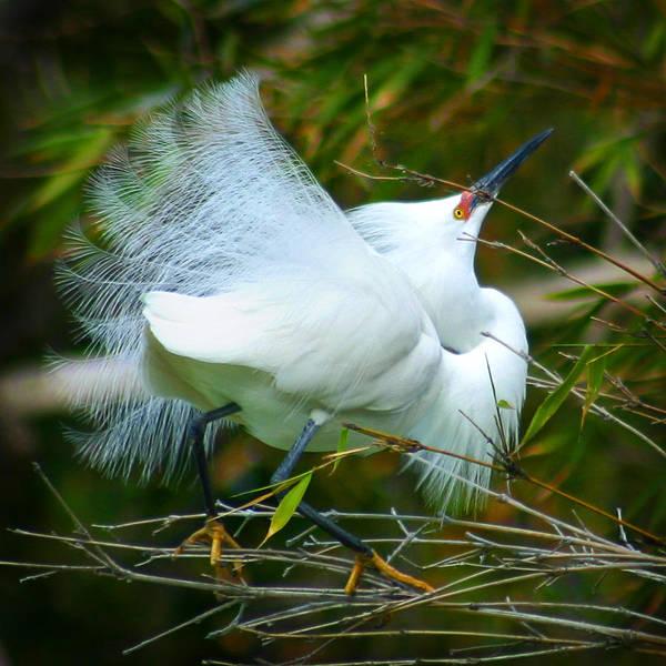 Dancing Egret Poster